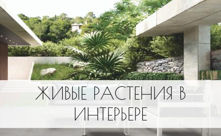 Живые растения в интерьере вашего дома